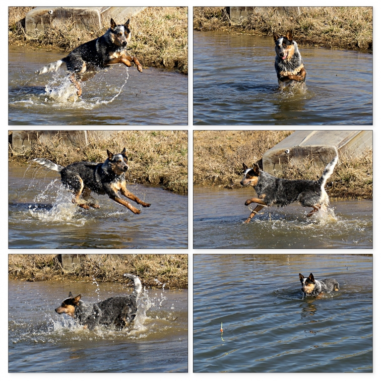 dog water action pictures